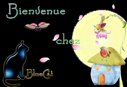 ♥ Bienvenue chez BlueCat ♥