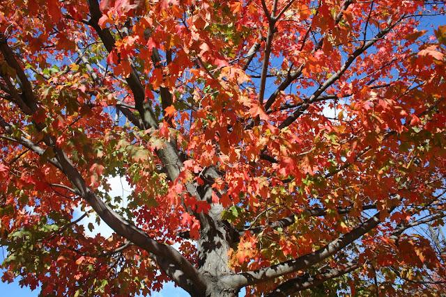 un arbre des fleurs geniales