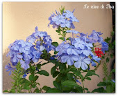 Fiori azzurri