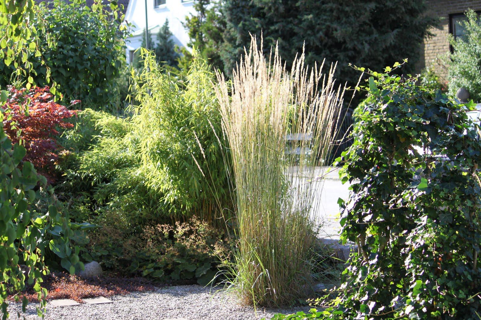 Vi tre & trädgård   blogg: augusti 2010