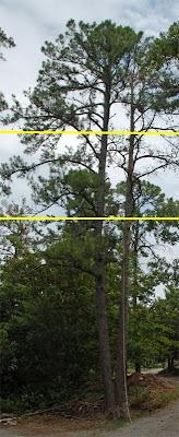 Marked Tree