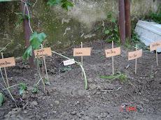 A nossa horta