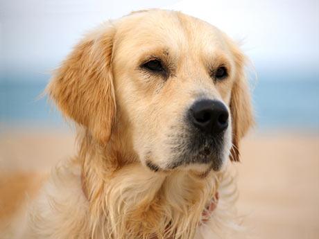 ... en fukuoka japón han demostrado de un perro pueden detectar a través