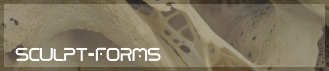 Sculpt_Forms
