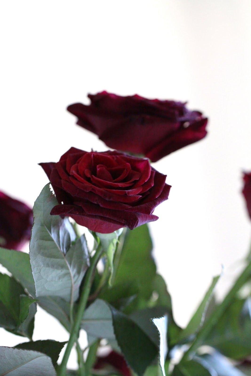 billiga blommor linköping
