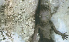 صورة المخلوق الغريب في الخبر الذي نشرته صحيفة الوطن القطرية