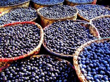 Acai Why It Is Good For You ?