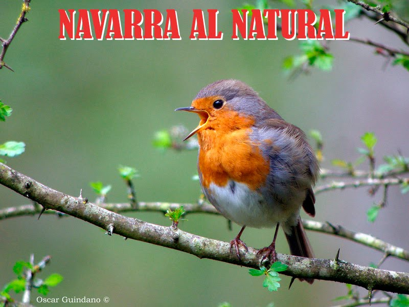 Navarra al natural