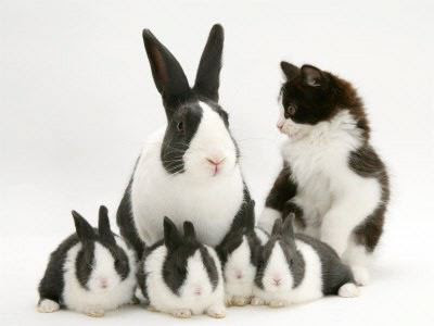 matching cat and bunny