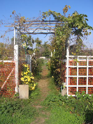 Entrance to the Davis Community Garden