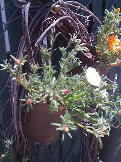 close up of grapevine wreath with portulaca