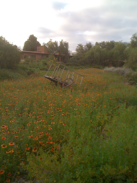 Gaillardia and an old cart