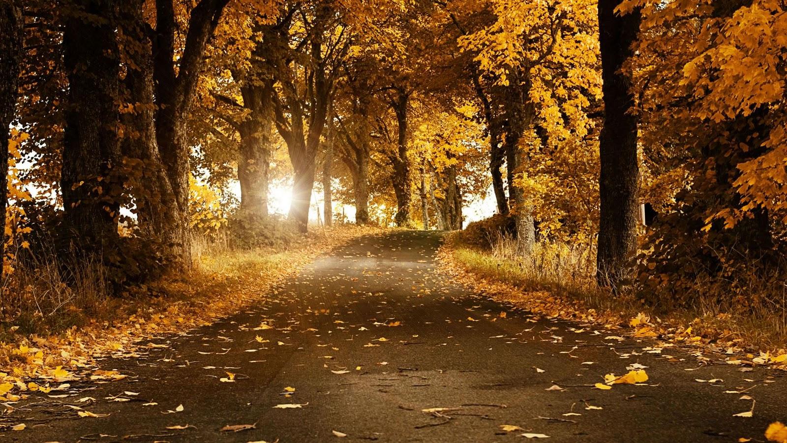 http://2.bp.blogspot.com/_UuCztOmHzkY/TTmY5EhyPrI/AAAAAAAAAAg/x9bzGeWFdAU/s1600/beautiful-autumn-wallpaper-1920x1080-1008098.JPG