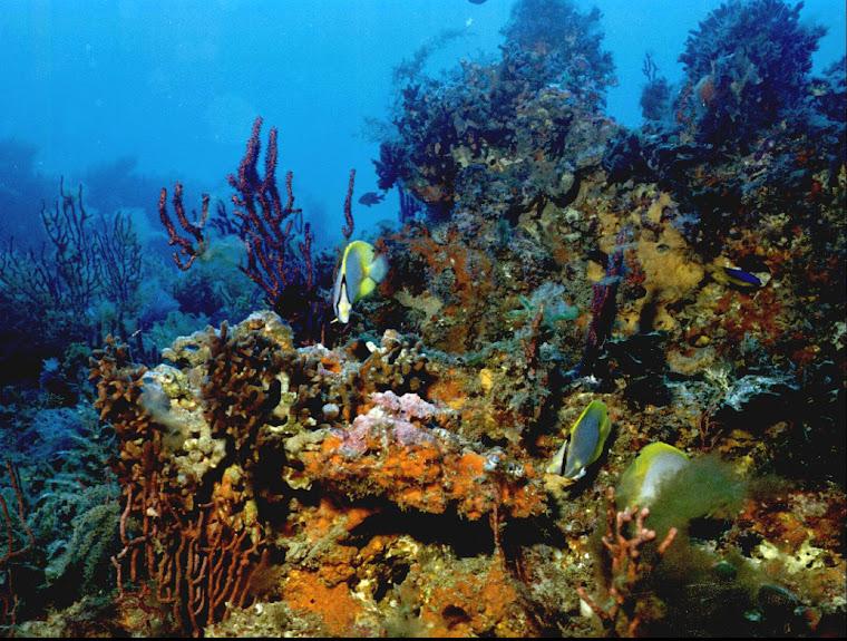 Coralreefs rule!