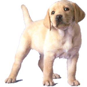 Un tuffo nel mondo animale il cane e le sue abitudini - Educare il cane a non salire sul divano ...