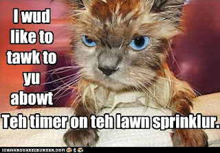 funny-pictures-wet-cat-is-angry.jpg