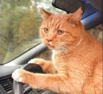 Feral Cats Abundant In South Australia