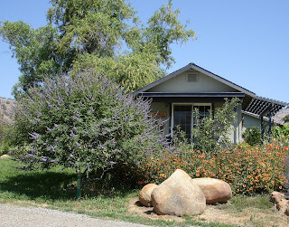 lavender-gift-shop-with-vitex-gallairdia-and-boulders