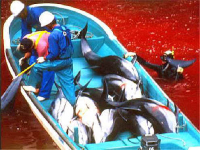 display industry reward fishermen dollars animals suitable commercial exploitation captivity