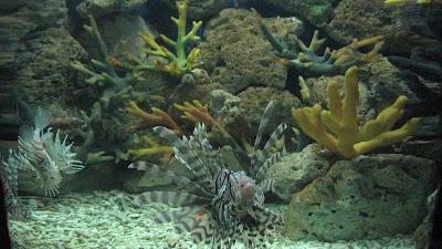 Manila Ocean Park: Oceanarium [April 2010] 9