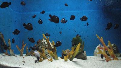 Manila Ocean Park: Oceanarium [April 2010] 8