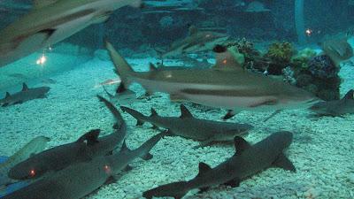Manila Ocean Park: Oceanarium [April 2010] 12