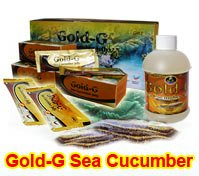Gold G Sea Cucumber