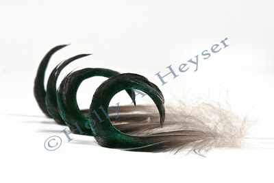 Holly Heyser, SmugMug, Mallard duck feathers