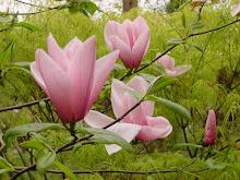 Flores hermosas que da vida