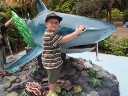 Anton- like a shark