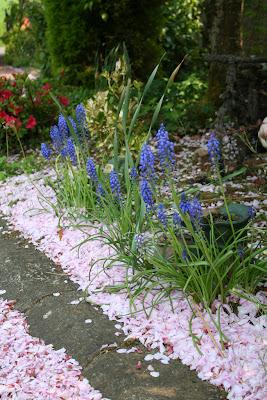 ultimele plante cu bulbi de primavara in  gradina