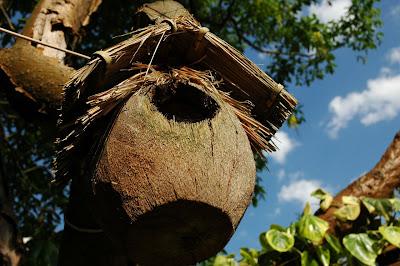 casuta pasari din cocos