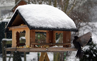 casuta pasari lemn iarna