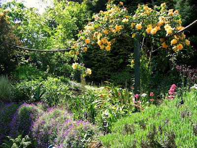 rosa - trandafirul floarea gradinii romantice