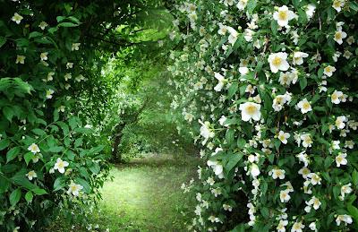 iasomia in gradina romantica