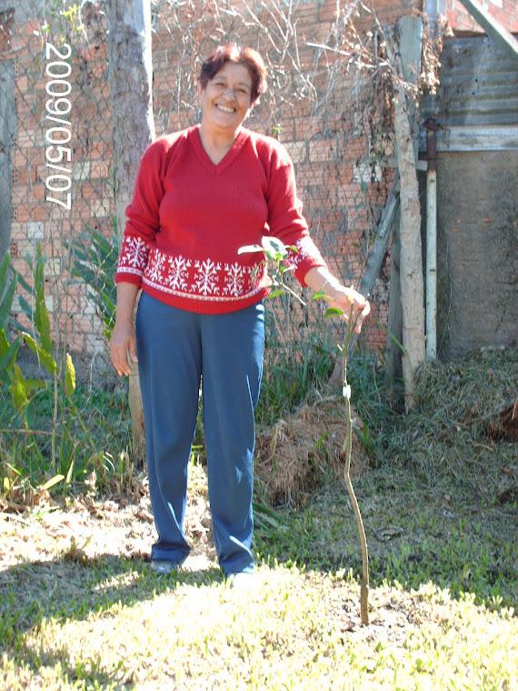 Funcionária Elsa e mais uma muda de laranja-do-céu doada pelo ministério público em sua casa.