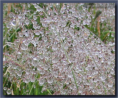 Water_on_plants_Closeup