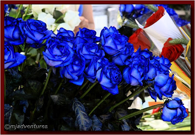 Blue_Roses