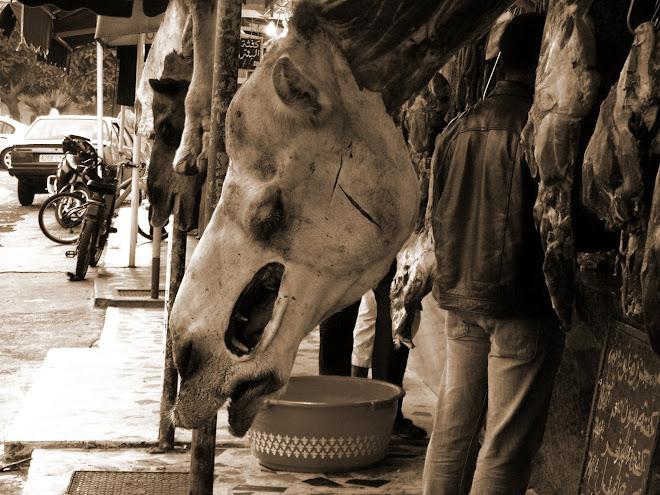Mercado del camello.marruecos 07