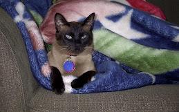 Simi the Spazmatic Kitty.