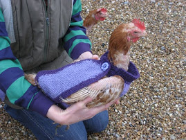 Odd bits: Knit a chicken sweater (jumper)
