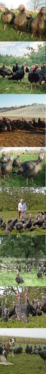 Copas Turkeys, copyright Copas.