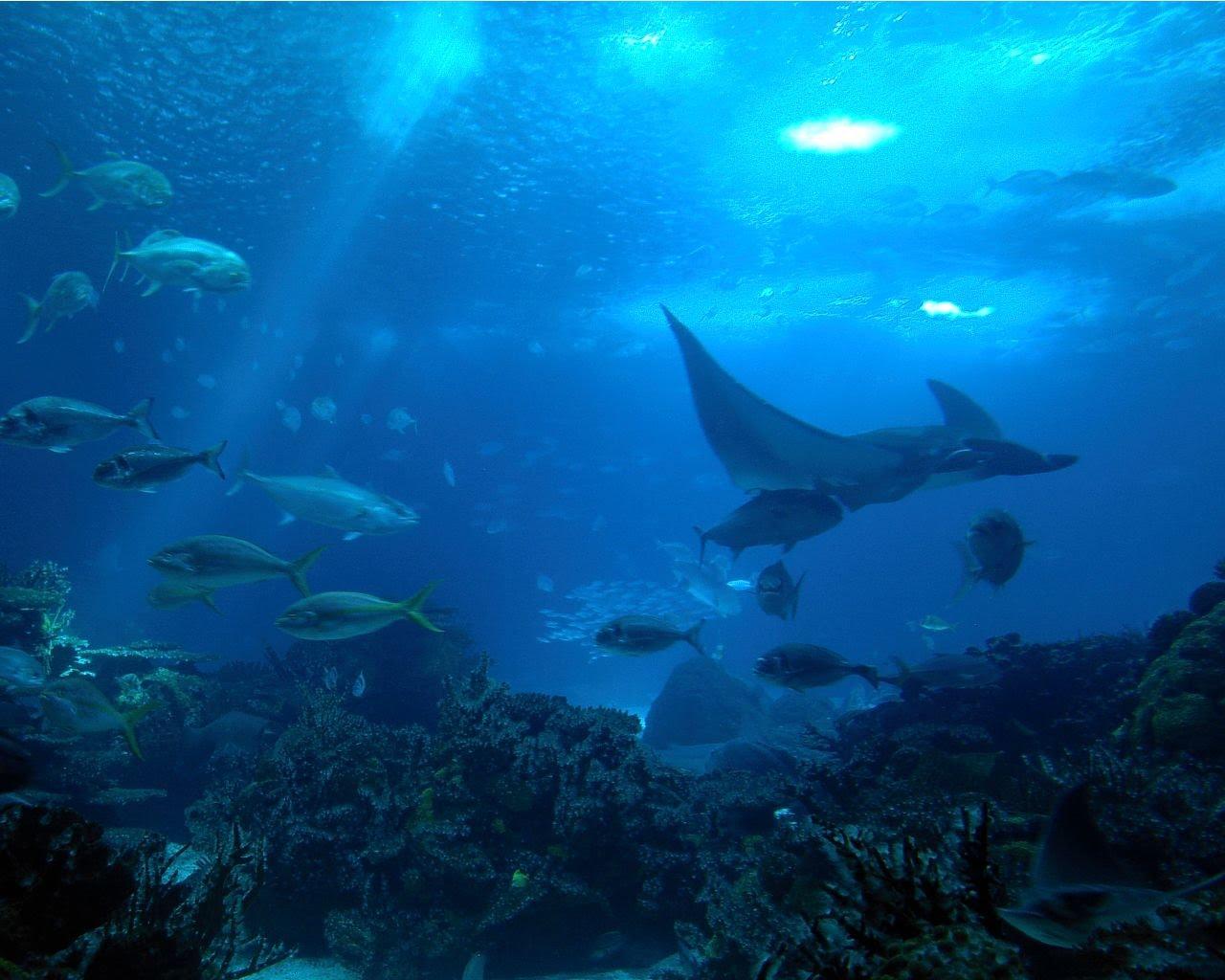 http://2.bp.blogspot.com/_V3914ZT99zc/TA312PiSVXI/AAAAAAAAACo/B5hLuAtpnlg/s1600/Oceano02.jpg