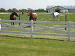 Equestrian & Livestock Fencing