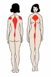 Figura 02 - Região Ventral e Dorsal