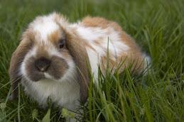 Athena Bunny