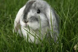 Roman Bunny