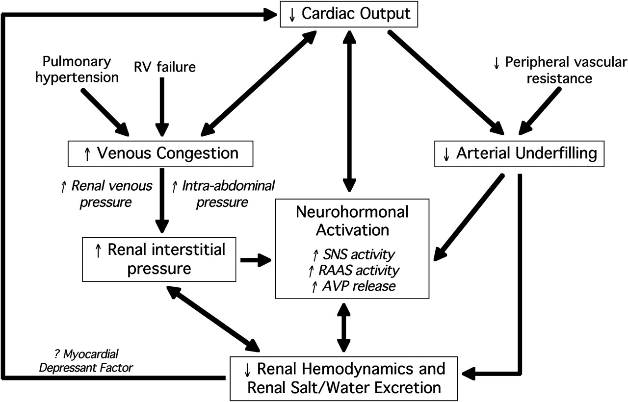 defintion there is no definite definition of the notion cardiorenal ...