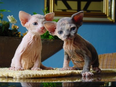 You guys are buying a house together and adopting a pair of hairless cats, ...