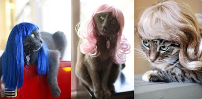 catwigs Hello, Kitty!